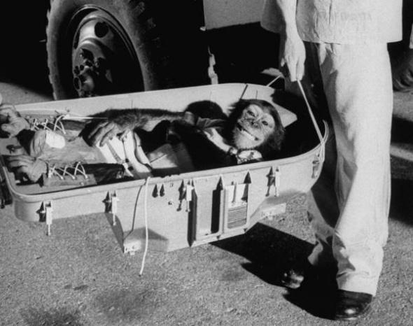 Întoarcerea pe Pământ a cimpanzeului care a zburat 16 minute în spațiu, 1961