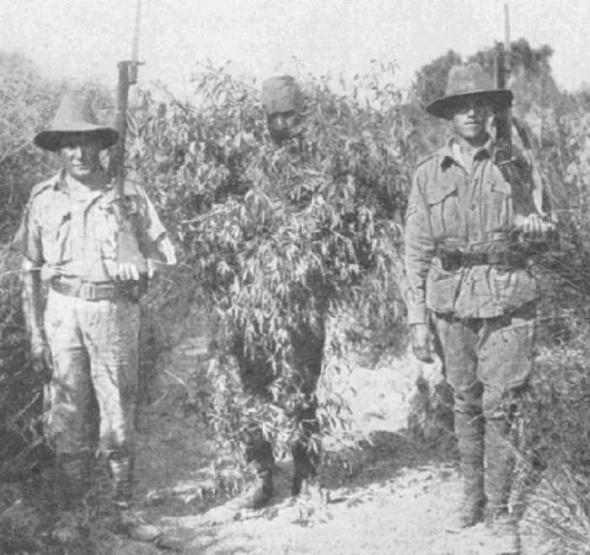 Un lunetist turc deghizat în copac este prins, iunie, 1915