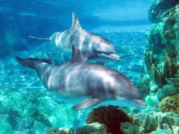 Delfini la Gradina Zoologica din Orlando
